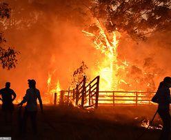 Fala upałów zbliża się do Australii. Temperatura najwyższa od 125 lat