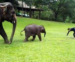 Słoniątko naśladuje człowieka. Wideo roztapia serca internautów