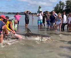 Tragedia na plaży. Zakatowali rekina na śmierć