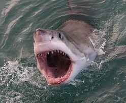 Pływał tuż przy brzegu, gdy nadpłynął rekin. Tragedia w turystycznym raju