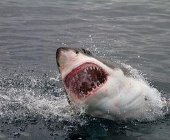 Zaatakował go dwumetrowy rekin. Życie uratował mu jego pitbull