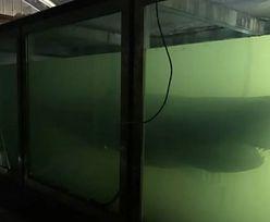 """Martwy rekin w opuszczonym parku rozrywki. Internauci zbierają na """"godny"""" pochówek"""