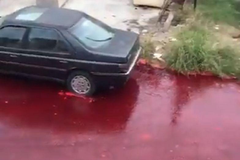 """Argentyna. Wypadek w rzeźni w Buenos Aires. Ulice zalało """"morze krwi"""""""