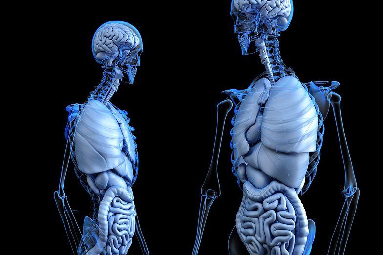 Odkryto nowy organ w ludzkim ciele. Jest naprawdę duży