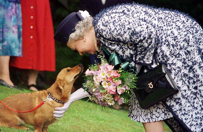 Umarł ukochany pies królowej. To koniec długiej tradycji