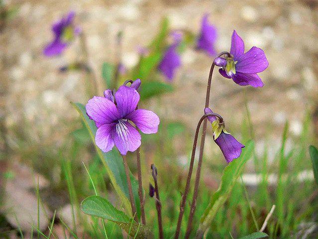 Kwiatowe nuty