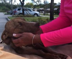Pies cudem uratowany miesiąc po kataklizmie