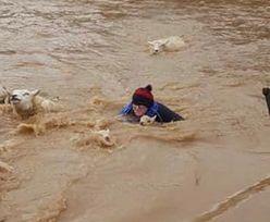 Sztorm Dennis. Farmerka wskoczyła do wód powodziowych, żeby uratować zwierzęta