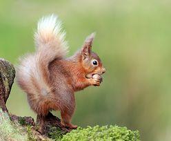 Zwierzęta zamieszkały w wisielcu. Niezwykły przypadek z Dolnego Śląska