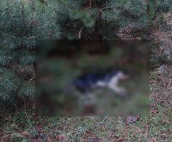 Bestialskie zabójstwo psa. Burmistrz wyznaczył nagrodę za wskazanie sprawcy