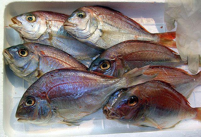 Świeże ryby w lodzie