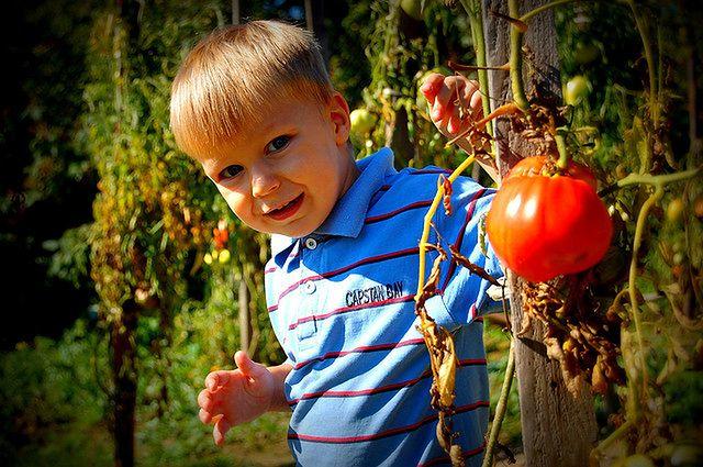 Pozwól dziecku zadecydować, które warzywo może zjeść