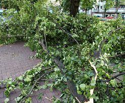 Wichura powaliła drzewo na samochód. Nie żyje 7-latek
