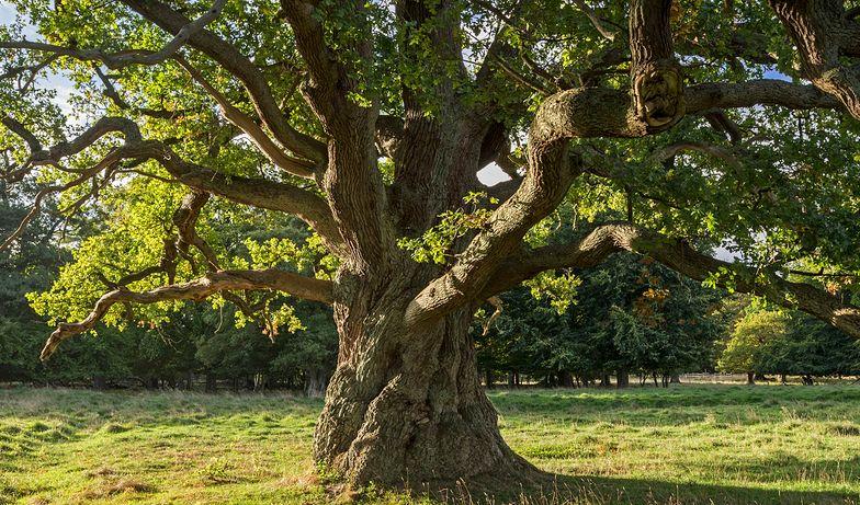 Ekologiczna misja na Instagramie. 500 tys. zasadzonych drzew