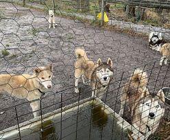 Australia. Armia uratowała 60 psów z płonących obszarów