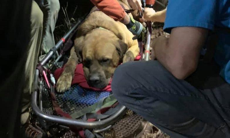 Mastiff tybetański Floyd utknął na szlaku górskim w Utah.
