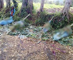 Masakra w Papui-Nowej Gwinei. Tragiczny bilans walk plemion