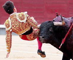 Pierwszy byk zginął z ręki matadora. Drugie zwierzę wzięło odwet