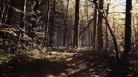 Spacerek po lesie – nowy zwiastun Blair Witch