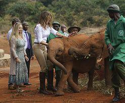 Melania Trump zaatakowana przez rozbawionego słonika