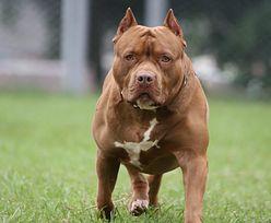 Pitbulle rzuciły się na 16-latka. Chłopak nie przeżył ataku psów