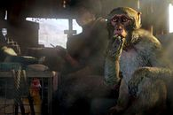 Konkrety na temat tego, jak zagrać ze znajomymi w Far Cry 4 bez posiadania gry