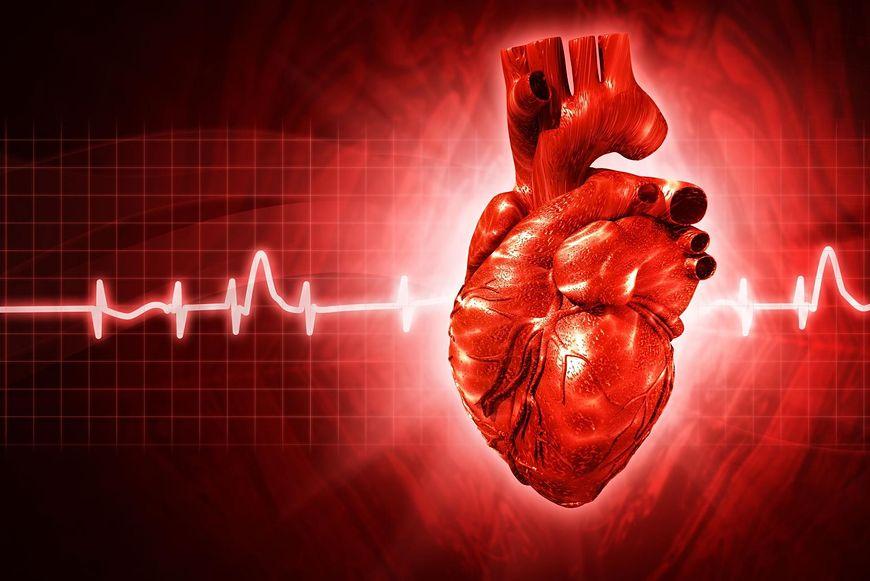 Serce kobiety, a mężczyzny