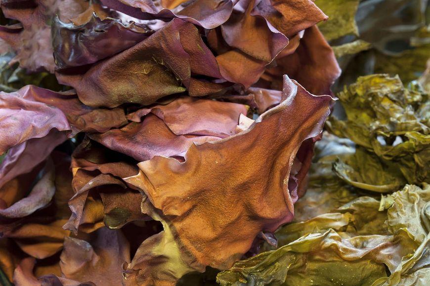 Dulse wspiera florę bakteryjną