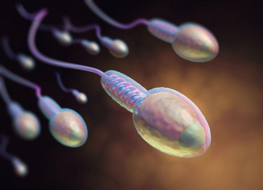 Szybkość spermy