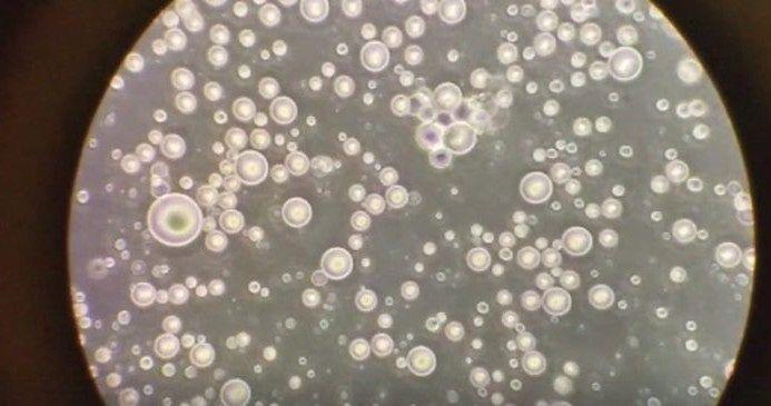 Mleko matki pod mikroskopem