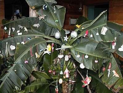 Drzewo bananowe udekorowane na święta