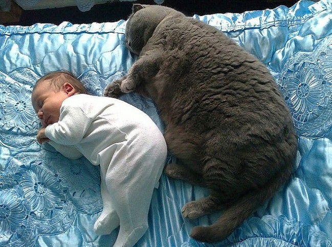 Aaa, kotki dwa...