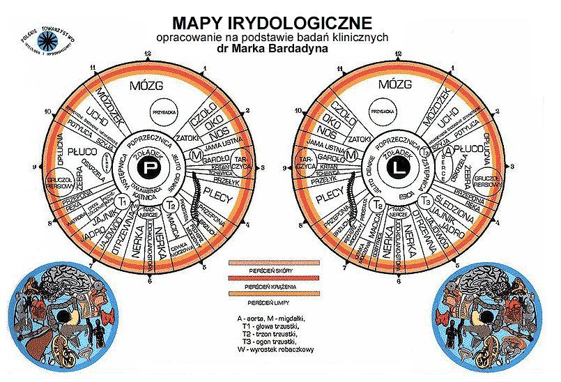 mapa irydologiczna