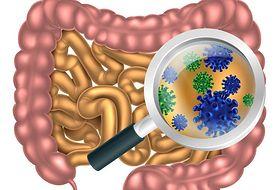 Jaką rolę w naszym organizmie pełni mikroflora jelitowa?
