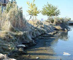 Gigantyczna pajęcza sieć na greckiej plaży. Ma 300 metrów