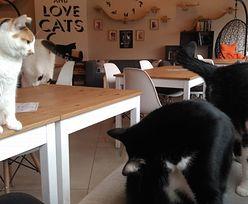 Gdynia. Dzieci dręczą koty. Mocne oświadczenie kawiarni