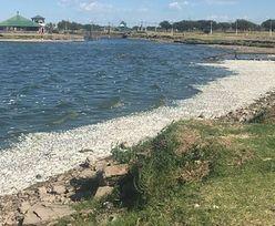 """Anomalia klimatyczna """"ugotowała"""" ryby w jeziorze. Fale wyrzuciły tysiące na brzeg"""