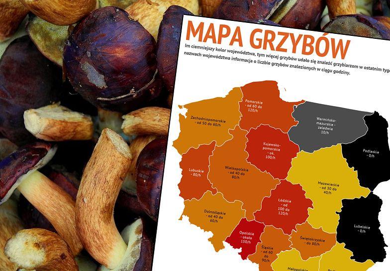 Oto grzybowa mapa Polski. Zachód może cieszyć się ze zbiorów - Wschód czekać na lepszy październik