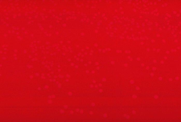 Zdjęcie pałeczki różycy