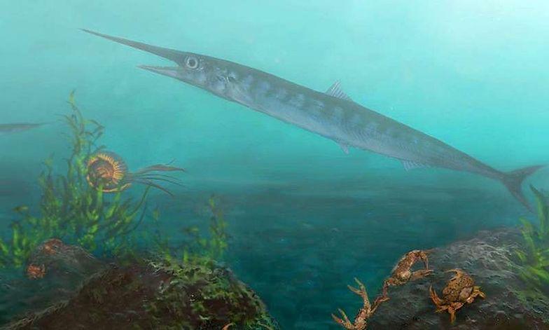 10-latek pomógł naukowcom znaleźć ślad po rybie, która ma 90 mln lat