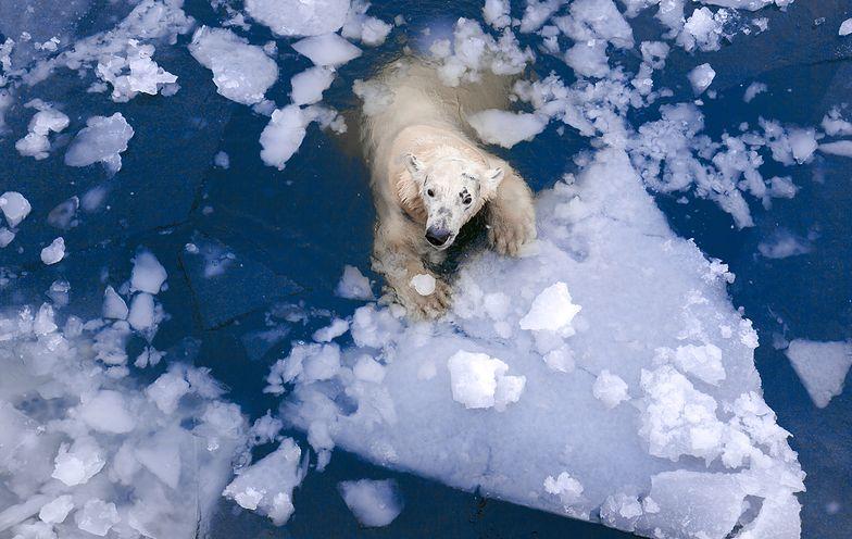 Topnienie lodów w Arktyce