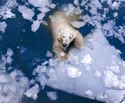 Topniejący lód w Arktyce niesie za sobą większe zagrożenia, niż sądzono