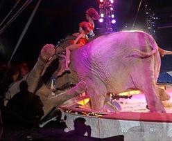 Chwile grozy w niemieckim cyrku. Słoń wpadł w publiczność