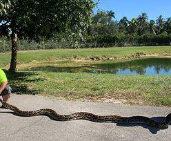 Gigantyczny wąż. Gad miał 5,6 metra