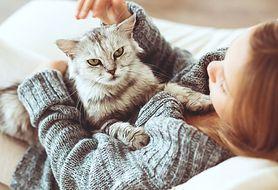 Nie wszystkie koty uczulają. Poznaj rasy niegroźne dla alergika