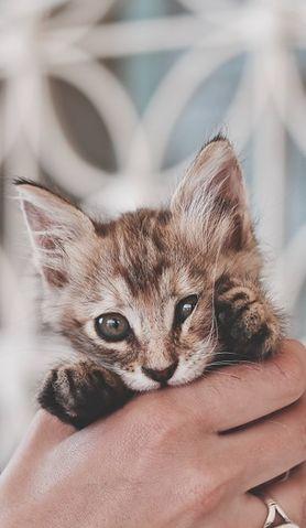 Czy koci katar jest groźny? Jak leczyć przypadłość?