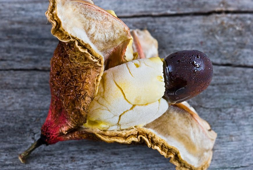 Owoc ackee