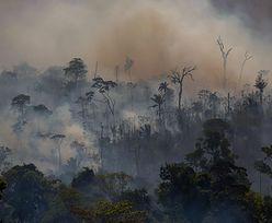 Amazonia w coraz gorszym stanie. Niepokojące dane agencji kosmicznej