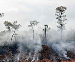 Puszcza Amazońska i klimat na Ziemi. Jaka jest prawda? Fakty i mity