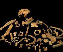 Niesamowite odkrycie. Najstarsze na świecie DNA, pochodzi sprzed 800 tys. lat